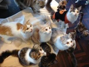 猫カフェMOCHA3