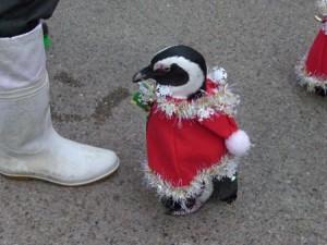 ペンギンサンタ